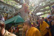 Его Святейшество Далай-лама проходит под ветвями дерева Бодхи в Бодхгае, Индия. 31 декабря 2011. Фото: Тензин Чойджор (офис ЕСДЛ)
