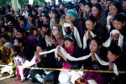 Тибетцы и иностранные ученики приветствуют Его Святейшество Далай-ламу в главном буддийском храме перед началом второго дня трехдневных учений. Дхарамсала, Индия. 12 ноября 2014 г. Фото: Тензин Чойджор (офис ЕСДЛ)
