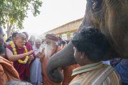 Его Святейшество Далай-ламу, прибывшего в ашрам Шри Удасина Каршни на ритуал рудра абхишека (омовение лингама Шивы) и ритуал хаван (огненная пуджа), встречают согласно индийским традициям. Матхура, штат Уттар-Прадеш, Индия. 21 марта 2017 г. Фото: Тензин Чойджор (офис ЕСДЛ)