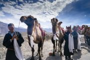 Местные жители со своими двугорбыми верблюдами выстроились вдоль дороги, ведущей к монастырю Дискет, чтобы выразить почтение Его Святейшеству Далай-ламе. Долина Нубра, штат Джамму и Кашмир, Индия. 12 июля 2018 г. Фото: Тензин Чойджор.